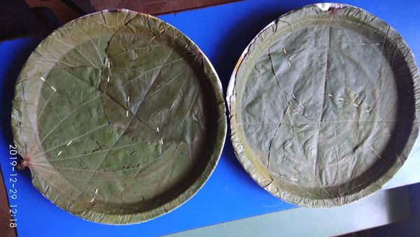 Disposable plates (made up of natural leaves), ava